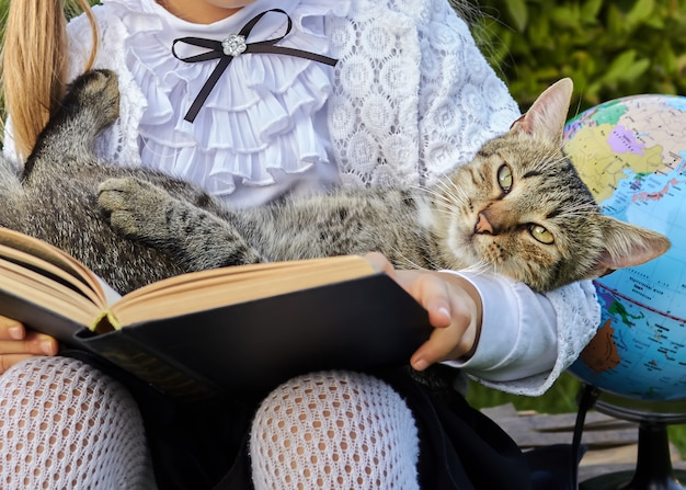 Chat dans le livre