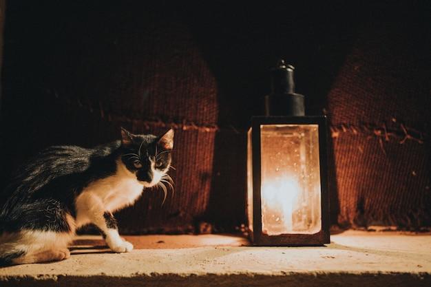 Chat dans la nuit noire avec une bougie