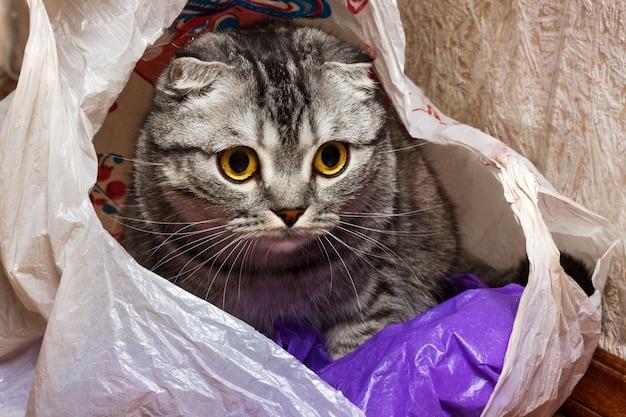 Chat dans le paquet à la maison. chat de curiosité