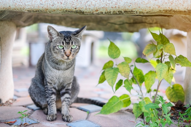 Chat dans le parc en plein air