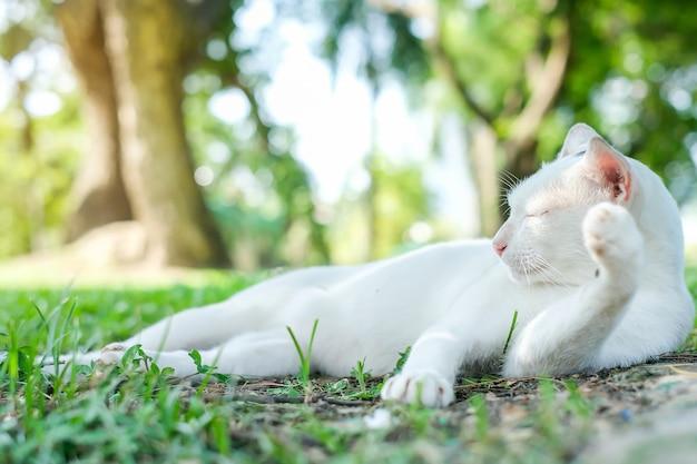 Chat dans le parc