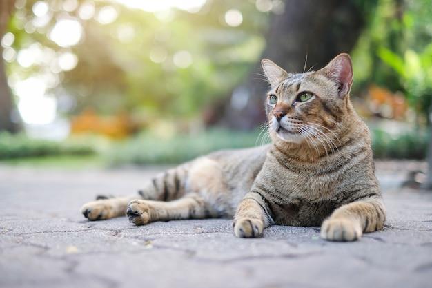 Un chat dans le parc
