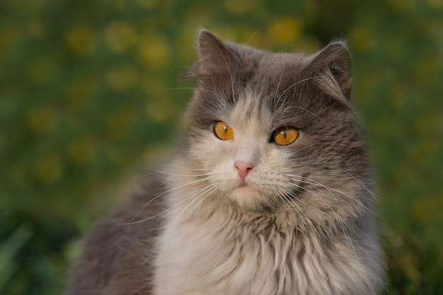 Chat dans le pré avec pissenlit fleurit autour