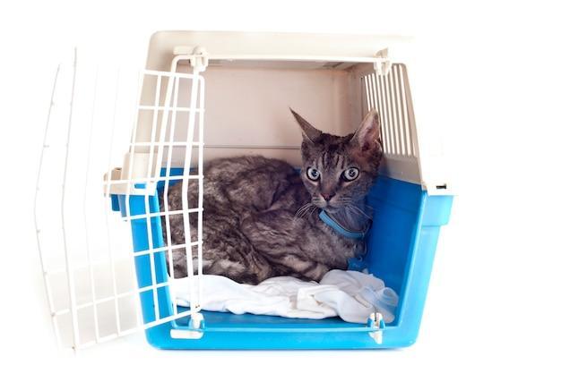 Chat dans un transporteur pour animaux de compagnie