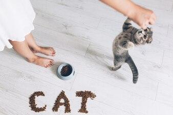 Chat debout et mendier pour la nourriture