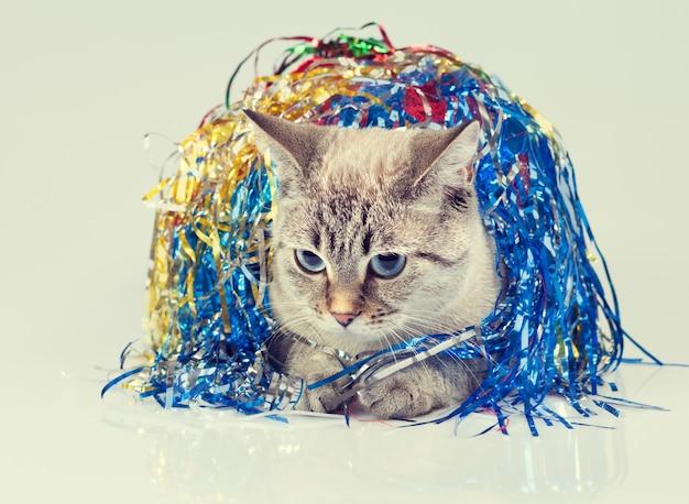 Chat avec décoration de noël