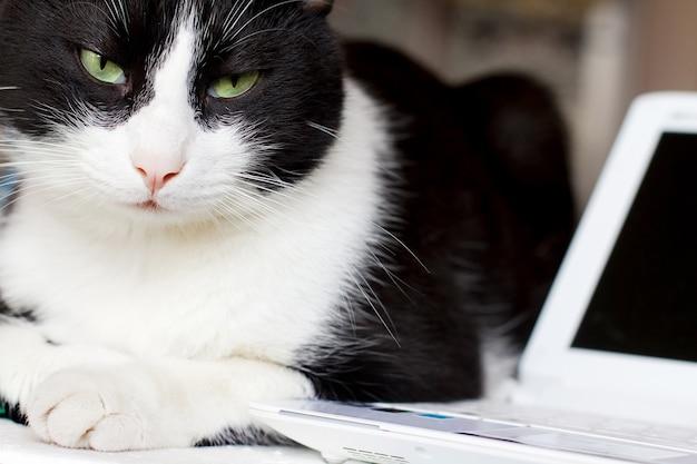 Chat détendu avec ordinateur portable
