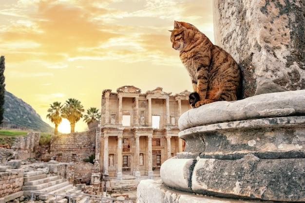Le chat devant la bibliothèque de celsus à ephèse l'après-midi
