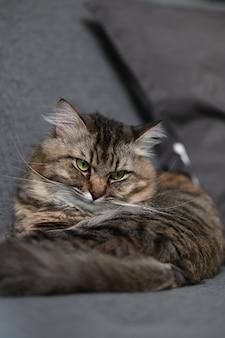 Un chat domestique allongé sur un canapé confortable dans le salon.