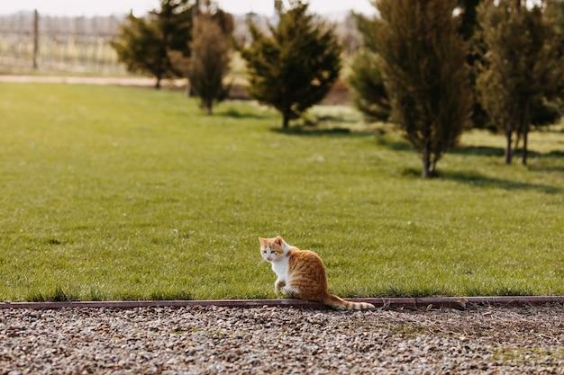 Chat domestique assis à l'extérieur sur une herbe verte à la campagne