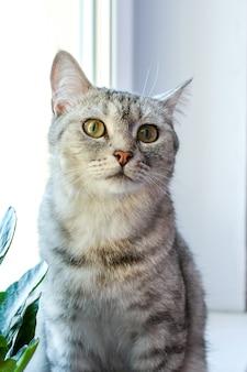 Chat domestique assis à la fenêtre et en attente d'affection