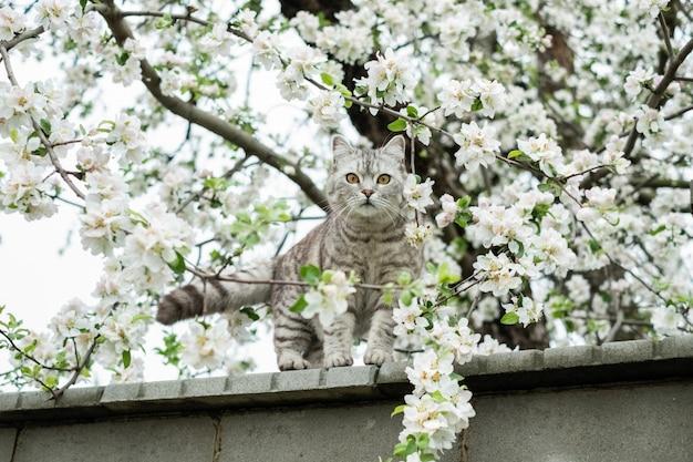 Chat domestique sur la clôture