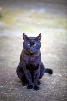 Chat domestique dans la cour