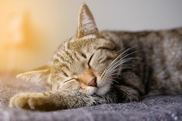 Chat domestique dort sur une couverture tricotée
