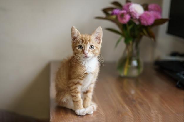 Un chat domestique est assis sur une table près d'un vase avec un bouquet et un ordinateur. photo de haute qualité