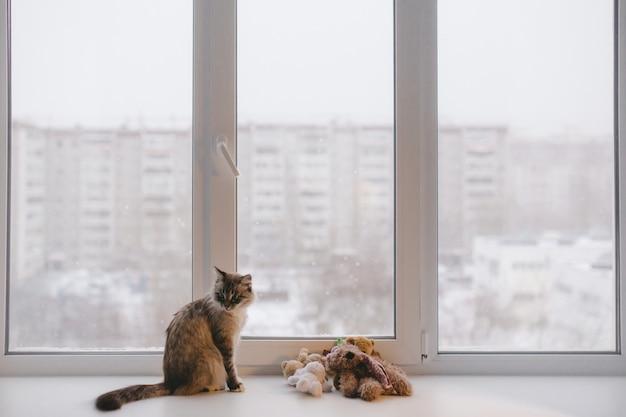 Chat domestique à la maison assis à la fenêtre