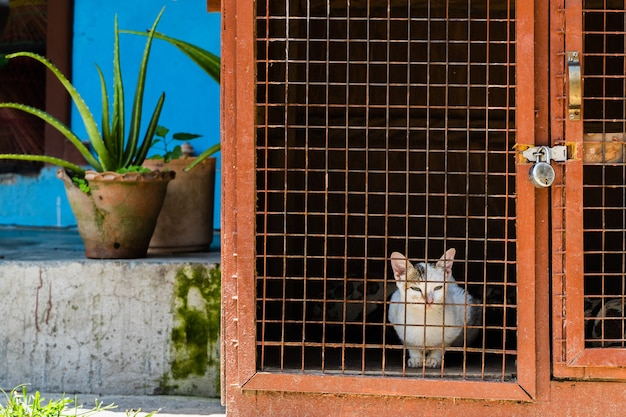 Chat domestique multicolore est assis dans une cage près de la maison. ville de pokhara, népal