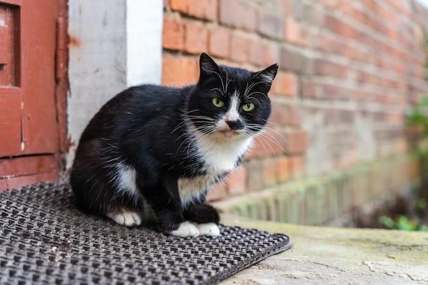 Le chat domestique noir et blanc est assis sur le tapis du porche
