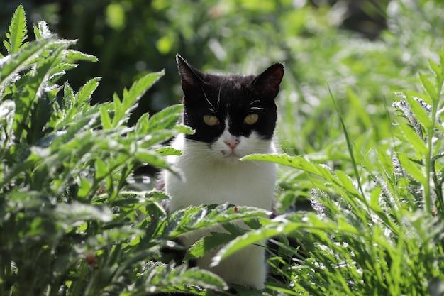 Chat domestique noir et blanc se reposant dans l'herbe verte par une journée ensoleillée