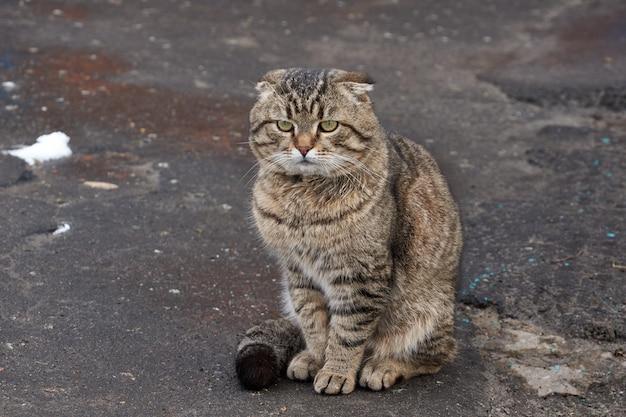Chat domestique se promène dans la cour de la maison