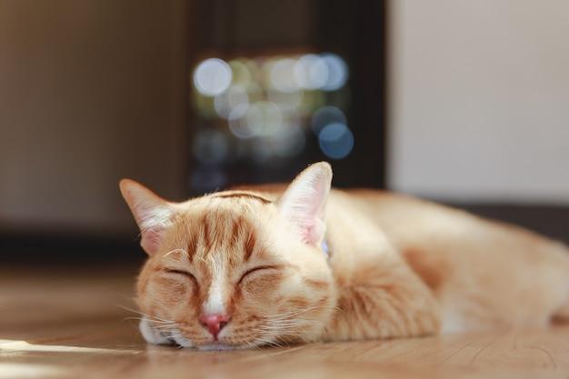 Chat domestique sieste sur un étage dans la salle de séjour.