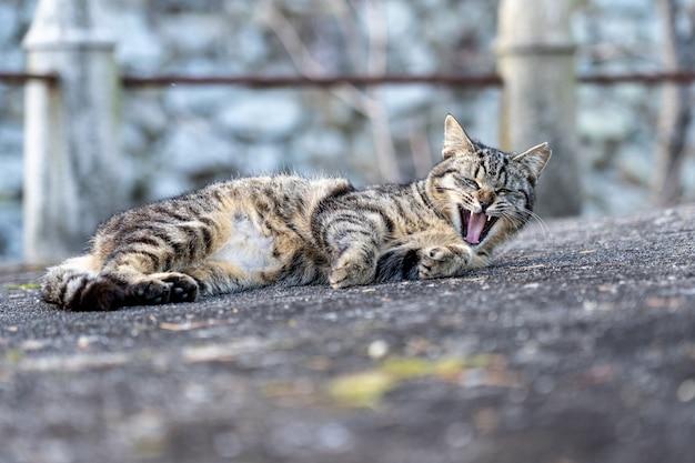 Le chat dormait dans une cour de pierre dans un temple au japon.