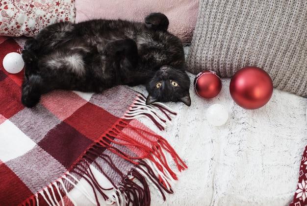 Chat dormant sur un canapé parmi les oreillers, concept de maison confortable