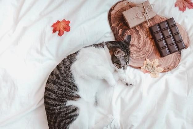 Chat dormant près de chocolat et cadeau