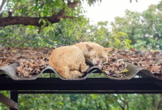 Chat dormir sur le toit