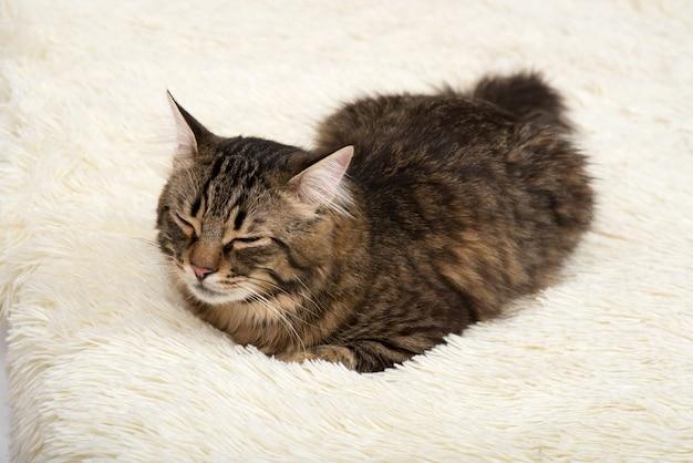 Chat dort sur une couverture en blanc, artificiel, peluche, fourrure