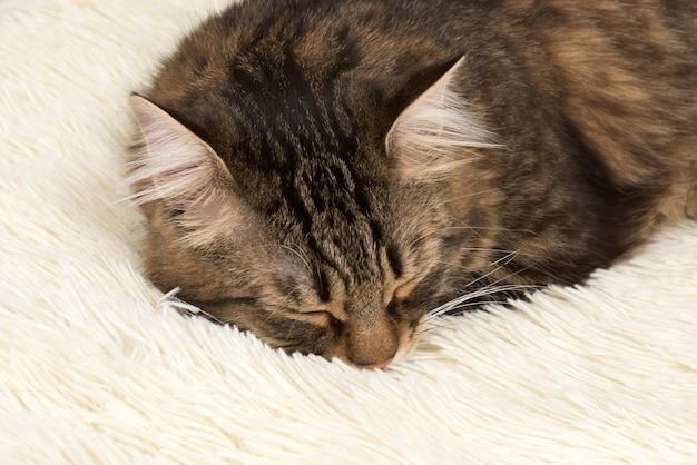 Chat dort sur une couverture en fausse fourrure blanche.