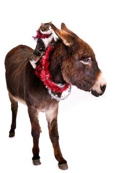 Chat sur le dos d'un âne, tous deux avec des guirlandes de noël.