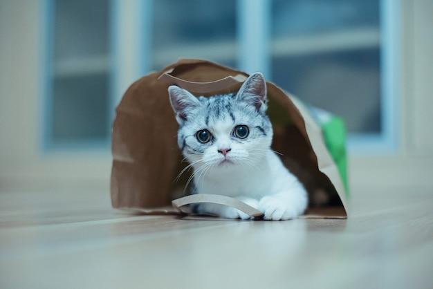 Chat drôle avec de grands yeux jaunes regarde par curiosité d'un sac en papier d'artisanat animaux drôles jouant à