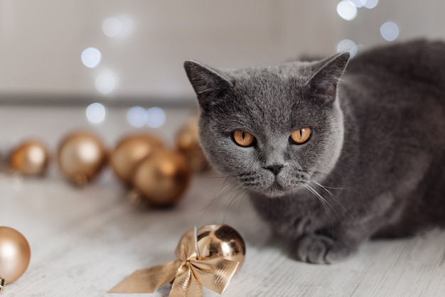 Chat du bengale sur un fond d'arbre de noël jouant avec des boules d'or et des jouets à la recherche de cadeaux.