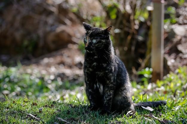 Le chat écailleux a un pelage noir et orange, il peut donc également être connu sous le nom de chat tortue.