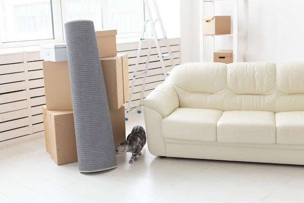 Un chat écossais gris curieux explore un nouvel appartement après avoir déménagé. le concept de la vie animale dans l'appartement et prendre soin des chats.