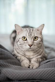Chat écossais mignon en marbre blanc.