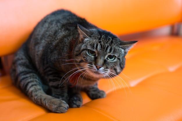 Un chat effrayé est assis sur le canapé