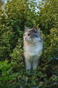 Chat émotionnel au repos dans l'herbe de printemps. chat gris dans le jardin. le chat aime le printemps dans le jardin. chat marchant dans un beau jardin avec des fleurs