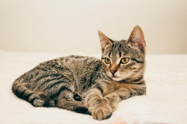 Le chat est allongé sur un lit de couleur beige