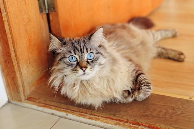 Le chat est allongé sur le pas de la porte et regarde l'objectif de la caméra
