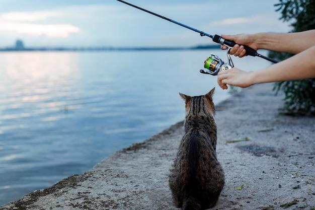 Le chat est assis et attend sur le rivage, pêcheur avec roue de canne à pêche