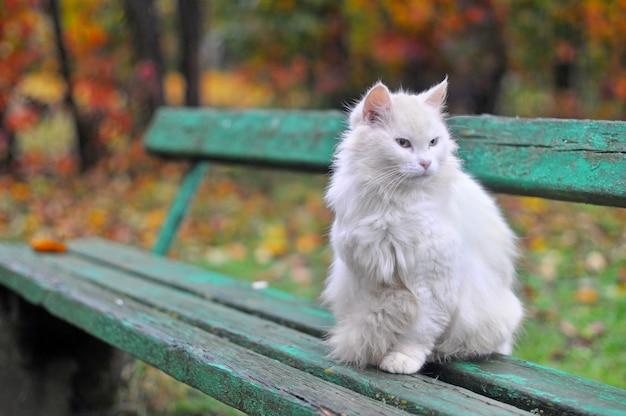 Le chat est assis sur un banc à l'automne