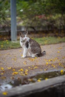 Un chat est assis dans le jardin. il est tellement mignon. il ressemble à un petit tigre. c'est un animal de compagnie populaire.
