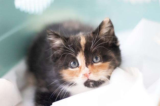 Le chat est assis dans un porteur pour animaux.