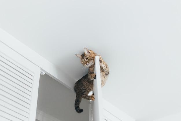 Le chat est coincé et s'assoit à la porte du placard