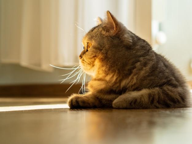 Le chat est couché sur le sol, le regard est dirigé sur le côté, un rayon de soleil du vent