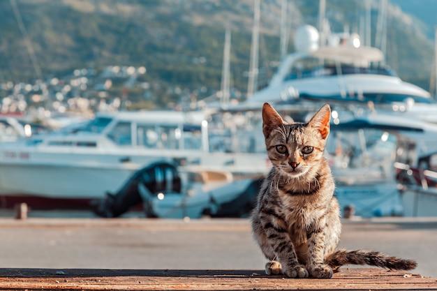 Le chat est sur le quai.