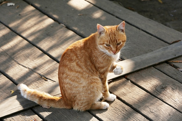 Chat à l'extérieur