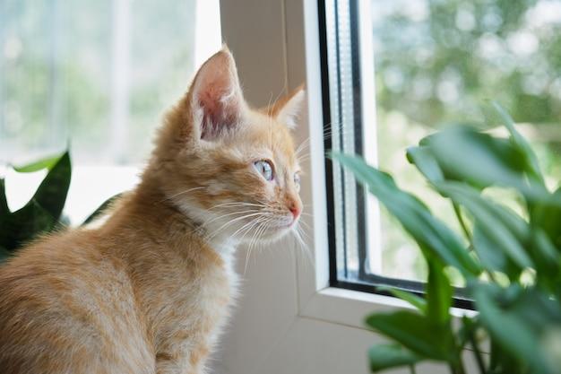 Chat sur une fenêtre blanche avec une plante et dans des pots. le chaton renifle les plantes d'intérieur. dangers des plantes domestiques pour les animaux de compagnie